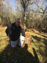 Black Mouth Cur Shed Hunting by Wildrose Blog Stories About The Wildrose Way