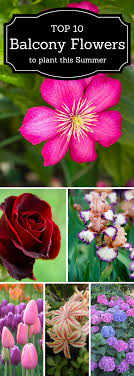 Top 10 Prettiest Flowers For Your Garden Or Balcony