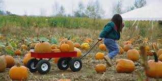 Central Wisconsin Pumpkin Patches by 12 Missouri Pumpkin Patches That Will Make You Ready For Fall
