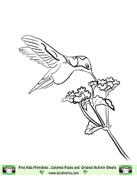 Image Detail For Free Hummingbird Coloring Page Lucy Learns Humming Bird