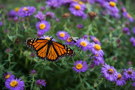 Attracting Insects To Your Garden by 10 Tips For Attracting Butterflies To Your Backyard