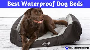 Bowser Dog Beds by What Is The Best Waterproof Or Water Resistant Dog Bed Pet