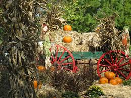 Pick Of The Patch Pumpkins Concord by Pumpkin Patch And Fall Festival Fun In The Upstate Carolinakids