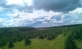 Christmas Trees Lewin Farms Homepage