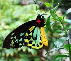 Live Butterfly Garden Indoors at Natural Bridge Va