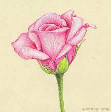 Flower Drawings Rose Drawing