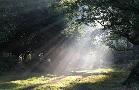 Billy Graham Daily Devotion Light and Shadow