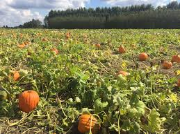 Best Pumpkin Patch Snohomish by A Narrow Gate Two Pumpkin Patches Old Home Vs New Home