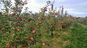 Best Pumpkin Apple Picking Long Island Ny by Fishkill Farms Apple Orchard Pick Your Own Apples Diversified