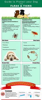 Flea Control For Dogs: Getting The Best For Your Buck How To Kill Fleas And Ticks All Naturally Youtube Keep Away From Your Pet Fixcom Get Rid Of Get Amazoncom Dr Greenpet Natural Flea Tick Prevention Tkicide The Art Getting Ticks In Lawns Teresting Rid Bugs Back Yard Ways Avoid Or Deer Best 25 Mosquito Control Ideas On Pinterest Homemade Mosquito Dogs Fast Way Mole Crickets Treatment Control Guide
