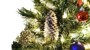 Making Christmas Tree Preservative by Christmas Chemistry Projects And Topics