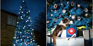 Are Christmas Trees Poisonous To Dogs by This Real Christmas Tree Fits Through Your Letterbox