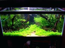 Aquarium Aquascaping Adventures In Appartment Freshwater Aquarium ... Home Accsories Astonishing Aquascape Designs With Aquarium Minimalist Aquascaping Archive Page 4 Reef Central Online Aquatic Eden Blog Any Aquascape Ideas For My New 55g 2reef Saltwater And A Moss Experiment Design Timelapse Youtube Gallery Tropical Fish And Appartment Marine Ideas Luxury 31 Upgraded 10g To A 20g Last Night Aquariums Best 25 On Pinterest Cuisine Top About Gallon Tank On Goldfish 160 Best Fish Tank Images Tanks Fishing