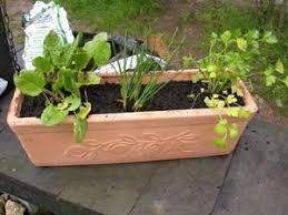 jardinière d aromatiques culture en pot pour fenêtre ou balcon