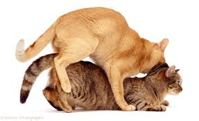 cats mating cats kittens cats 2