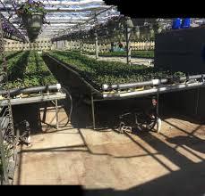 Miller Christmas Tree Farm Ct by Vaiuso Farms Inc Home Facebook