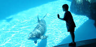 monterey bay ca hotel monterey bay aquarium packages