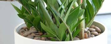 entretien plante grasse d interieur plantes d interieur faciles d entretien maison design bahbe