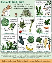 Can Rabbits Eat Roasted Pumpkin Seeds by Your Rabbit U0027s Diet Plants Vegetables U0026 Fruit