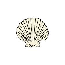 Seashell clipart black and white free clipart images 3 ❤ liked on Polyvore featuring ocean