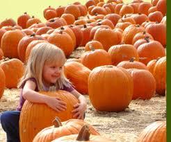 Petaluma Pumpkin Patch Corn Maze Map by Pumpkin Patch And Corn Maze In Petaluma California Petaluma