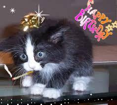 happy birthday cats cat birthday cat happy birthday Cat birthday Happy Birthday Cat