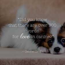 Dog Quotes We Rounded Up The Best Of The Best Dog Quotes