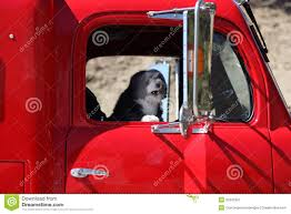 Angry Dog Truck Driver. Stock Image. Image Of Commuting - 35342397 Alberta Spca Opens Invesgation After Photos Show Dogs Above Dog Truck Stock Photos Royalty Free Images Travel Hammock Back Seat Cover Protect Your Car Or Is It Legal In Washington To Drive With Your Dog Loose Bed Harness Korrectkritterscom Angry Truck Driver Stock Image Image Of Commuting 35342397 Scania T Rjl Mad Dog Truck Skin 130 Euro Simulator 2 Mods Found Wearing A Jacket What Was The Pocket Led Traveling Pet This Holiday Part 4 Mckinney Animal Tree Roots Tampa Food Trucks Roaming Hunger Facilities Great Of Cute Dogs
