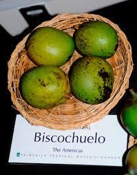 Coconut Grove Halloween Festival by Mango Festival Miami Fl Fairchild Tropical Botanic Garden The