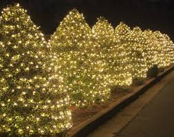 Wrap Bushes And Hedges With Christmas Lights