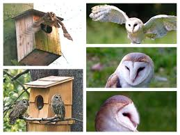 Gardening For Birds: All About Nesting Logs And Boxes - Hecker Nursery Common Barnowl Tyto Alba Two Juvenile Common Barn Owls At The Pramo Clothing Owling In Owls Glenn County Resource Cservation District Barn Owl Nest Box Nhbs Wildlife Shop Gardening For Birds All About Nesting Logs And Boxes Hecker Nursery Triangular Girl Scout Gold Award Benefits Birds Burroughs Audubon Society Boxes Hungry Project Bbook Mount Gravatt Environment Group Wiggly Wigglers Duhallow Raptor Plans Vip