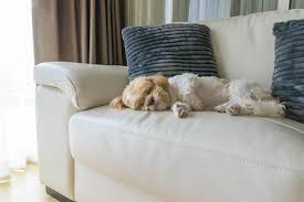 Best Fabric For Sofa With Dogs by Best Fabrics For Pets On Furniture Best Fabrics 2017