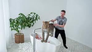 wildes wohnzimmer russen models raubkatzen tv programm