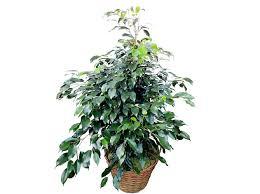 plante de bureau leçon de déco quelle plante pour mon bureau décoration