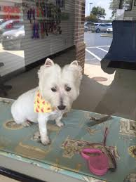 Hollycrest Bed And Biscuit by Pup In A Tub Pet Groomers 435 The Pkwy Greer Sc Phone