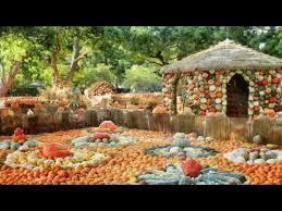 Pumpkin Patch Denver Botanic Gardens by Best 25 Pumpkin Patch Dallas Ideas On Pinterest Fall Couple