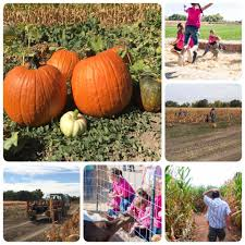 Ramona Pumpkin Patch by Harvest Days Home Facebook