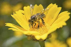 top 10 flowers that attract bees birds and blooms