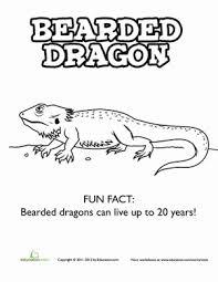Kindergarten Coloring Worksheets Bearded Dragon Page