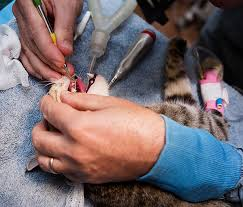 cat dental care 5 reasons your cat s teeth cleaned is worth the cost catster