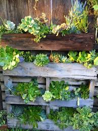 Susans Garden Vertical Repurposed Pallet Succulent Arrangement Drought