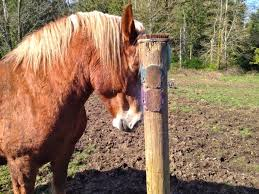 Rubber Horse Shedding Tool by Affordable Diy Equine Scratching Post Solutions Listen To Your Horse