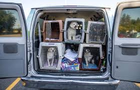 Organization Expands Its Efforts To Save Shelter Pets In West ... Transportation Of Dangerous Goods Transline Juggernaut America Stock Photos Images Swis Facility Ipections Public Portal Interim Pin By Jeff On Old School Trucking Pinterest Trucks Kenworth Meets Hedging Truck Driver Shortage Eating Into Las Vegas Valley Company Profits Mgm Bulk Port Hedland Promo Youtube Sikh Truck Drivers Reach Discrimination Settlement With Jb Hunt Llc 247 Service Specialized Transport Corp Eden Nc Rays Inc Newark De