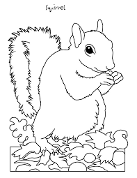 Hibernating Animals Coloring Pages AZ