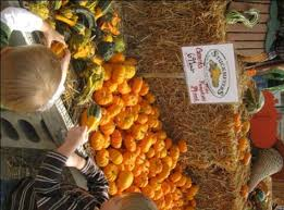 Schaake Pumpkin Patch by Best 25 Pumpkin Patch Kansas City Ideas On Pinterest Events In