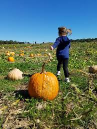 Best Pumpkin Patch Charlotte Nc by Pick Your Own Pumpkins The Mint Hill Times