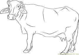 Badware Cow Coloring Page