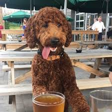 Sycamore Pumpkin Fest Charlotte Nc by Enjoy Puppies U0026 Pints At Sycamore Brewing Charlotte Offline