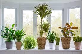 11 pflegeleichte zimmerpflanzen für ihre wohnung