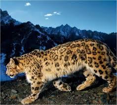 100 Wildcat Ridge Metalworks Home Facebook
